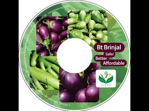 """Bt Brinjal Short Video """"Bt Brinjal -- Safer, Better & Affordable"""""""