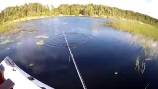 Рыбалка на щуку и окуня в августе
