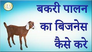 बकरी पालन का बिजनेस कैसे करे ।। Loan कहाँ और कैसे मिलेगा ll How to develop Goat Farm