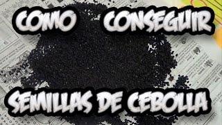 Como Conseguir Semilla De Cebolla || Semillas Organicas || La Huertina De Toni