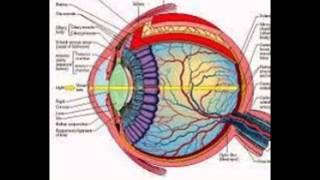 Function Of Eyes