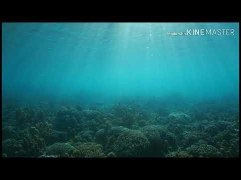 Lady Antebellum: OCEAN (LEGENDADO PORTUGUÊS)