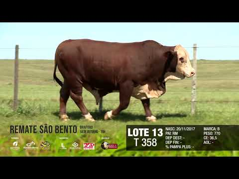 LOTE 13 T 358