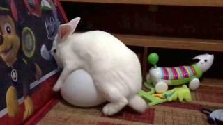 Bunny sex balloon