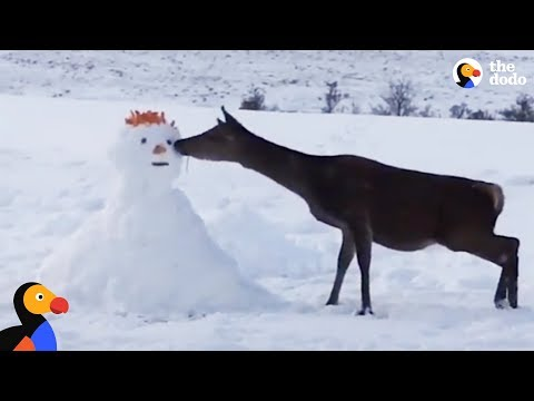 Deer Meets Snowman And Devours Him | The Dodo