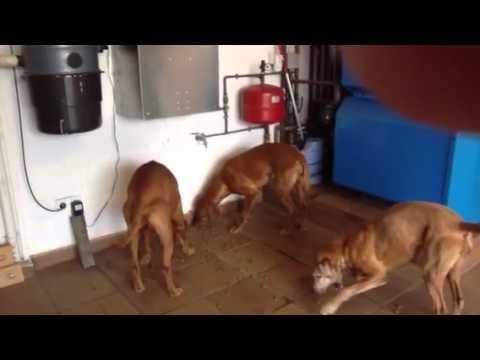 Comederos autom ticos para perros y caballos como for Comederos para perros