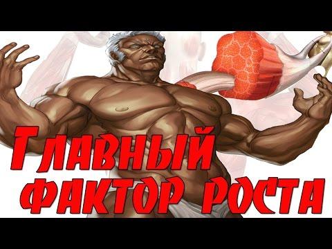 Самый главный фактор роста мышц