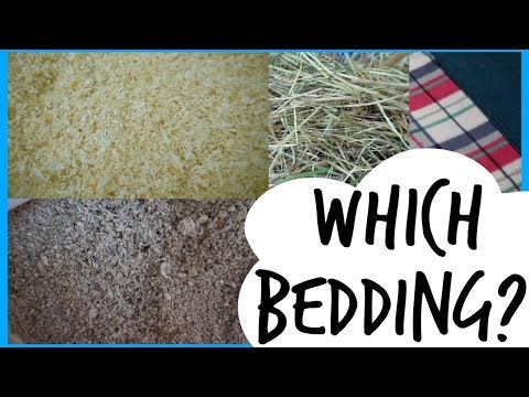 BEDDING | For Small Pets
