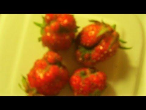 Почему вырастает много уродливых ягод клубники