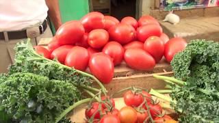 1.- Agricultura Orgánica en México. Mirador Universitario