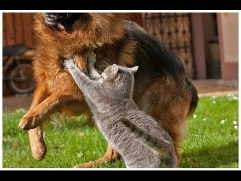 Коты против собак! Угар!!