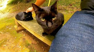 ベンチに黒猫コンビが座っていたので一緒に座ってナデナデしてきた