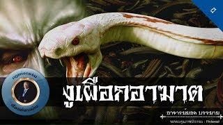 อาจารย์ยอด-งูเผือกอาฆาต-ผี