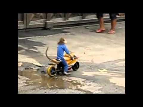 Khỉ chạy môtô.clip