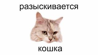 ПРОПАЛА КОШКА / ИЩЕМ ЭКСПЕРТА И ЭТО НЕ ПРАНК