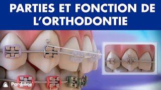 Appareil dentaire – Parties et fonction de l'orthodontie ©