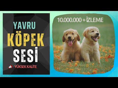 YAVRU KÖPEK SESİ- UZUN VERSİYON.