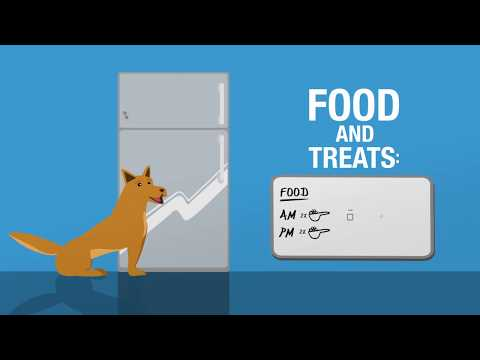 Maintain a Healthy Weight for Your Pet!