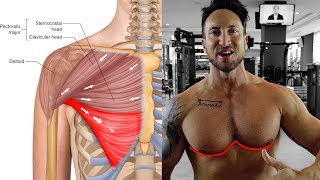 The ONLY 3 Lower Chest Exercises You Need For The