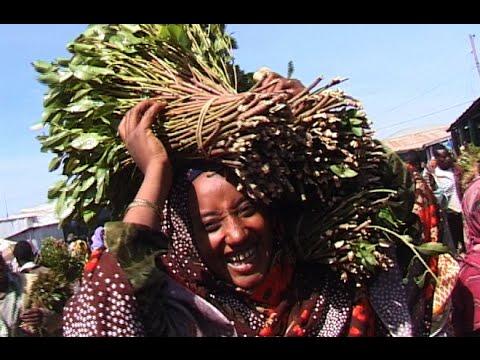 Le Khat à Harar en Ethiopie