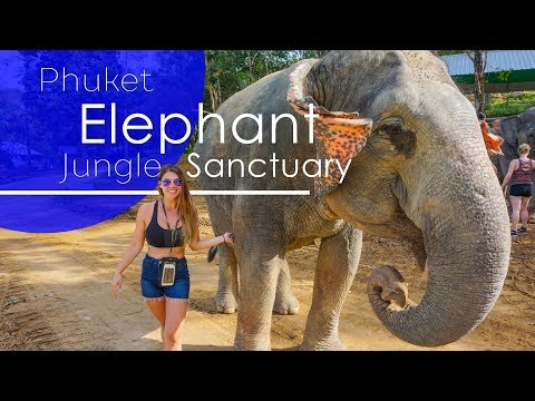 Phuket Elephant Jungle Sanctuary | Top Things to do in Phuket | Elephants in Phuket, Thailand