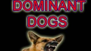 Dominance Debunked- The Myths & Realities Of Training Dogs