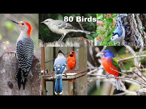 Identify Your Backyard Birds