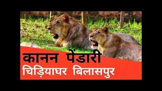 कानन पेंडारी एक इंसान दारू पीकर शेर के पिंजरे में कूद गया।