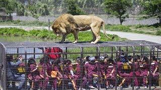 Los 5 Zoológicos Más Asombrosos Del Mundo