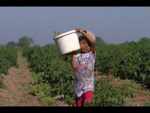 Mexican children shoulder state's labour woes