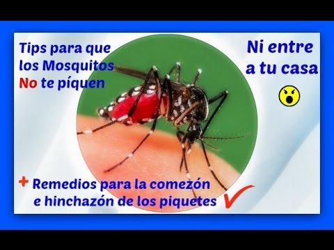 Es eficaz el cido b rico para eliminar una plaga de pu - Como eliminar los mosquitos de mi casa ...