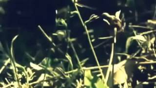 Full Documentary Animal Imposters National Geographic
