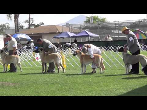 Bahia Sur Kennel Club Dog Show 6 15 14