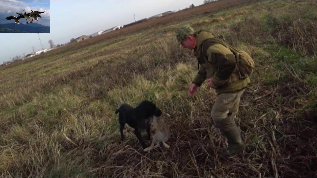 Охота на зайца, ОТЛИЧНОЕ открытие 2019