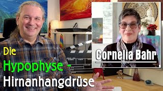 Hirnanhangdrüse / Hypophyse   Cornelia Bahr - GAWÉL