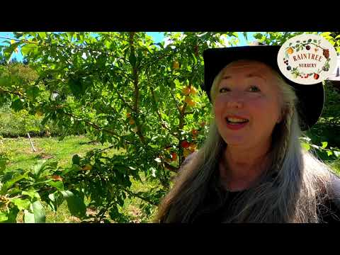 Raintree Nursery's Plum Growing Guide!