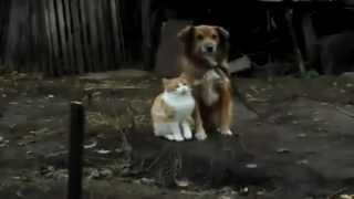 Очень доброе видео про животных