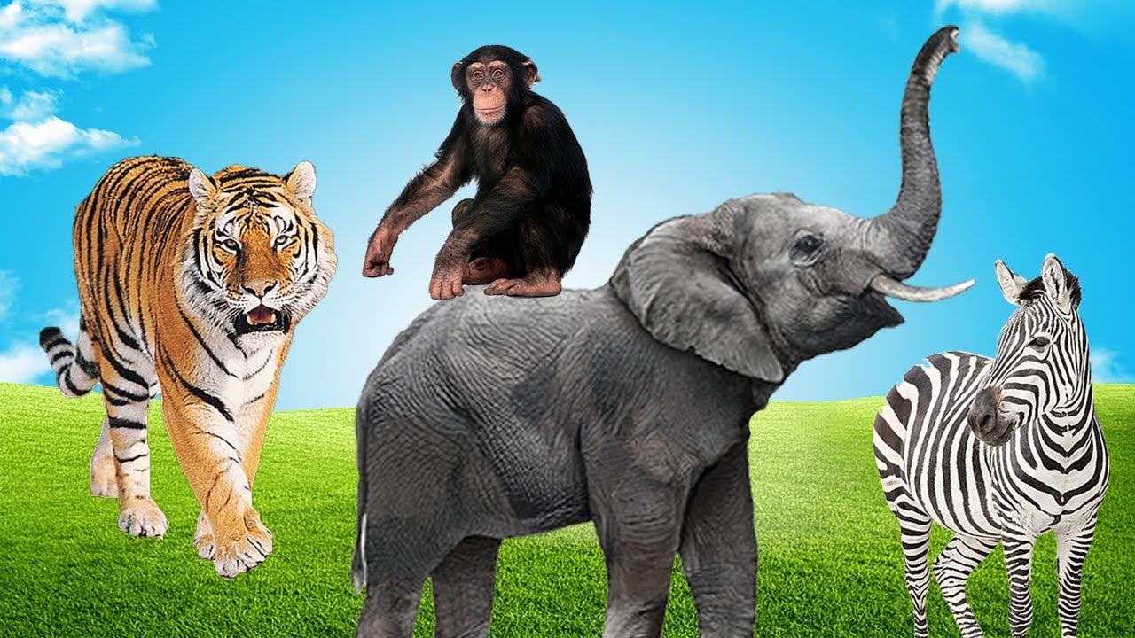 O Show da Vida Selvagem - Leão, Zebra, Girafa - Som dos Animais