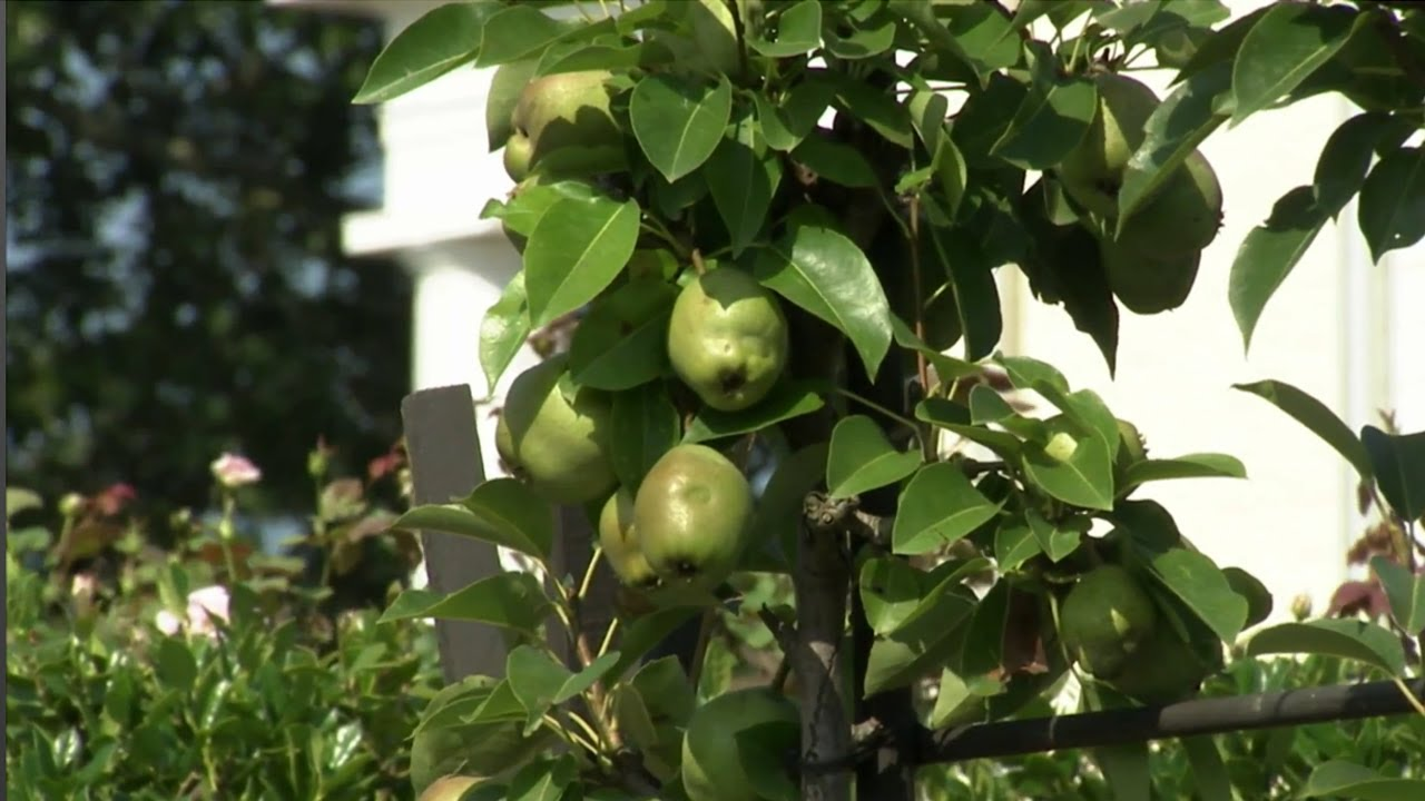 Home Fruit Gardens -