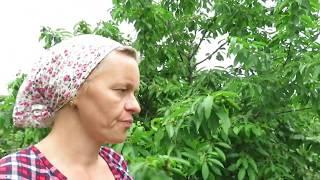 Перец на ужин \Тефтели в запас \Сад и огород
