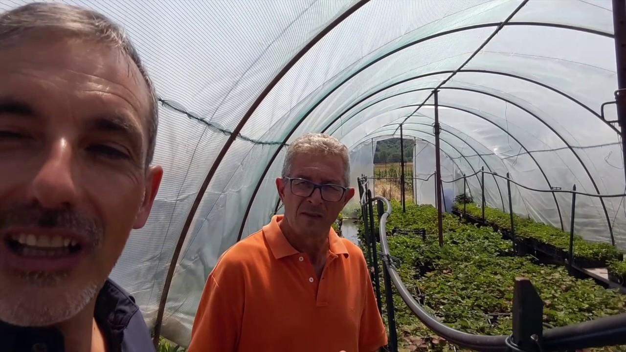 Rampicanti Che Crescono All Ombra rampicanti da frutto - guida sulle varietà e la potatura