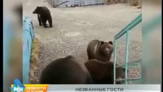 Медведь растерзал двух собак в Маркова