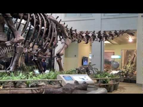 Dinosaur Brachiosaurus There