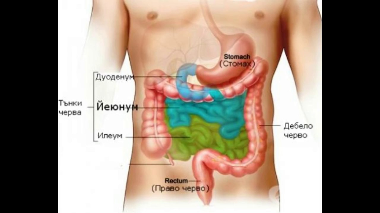 What is the Ileum - YouTube