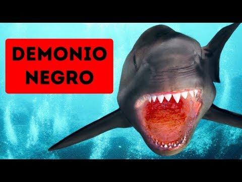 Podría existir un tiburón más espeluznante que el megalodón