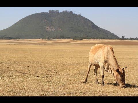 Birding Ethiopia (2/6): Addis Ababa, Entoto Natural Park & Gefersa Reservoir