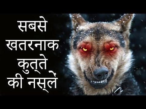 दुनिया के 5 सबसे खतरनाक कुत्ते   5 Most Dangerous Dogs In The World In Hindi