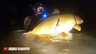 Подводная охота 2020 Подводная охота на реке Белая в протоках Сазаны в корягах Битва с Аксакалом 2