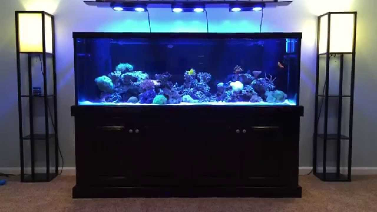 Ecotech radions on 180 gallon reef update youtube for How much is a fish tank