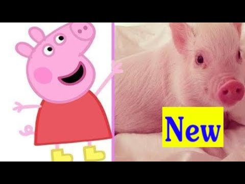 PEPPA PIG VIDA REAL 2018 Peppa Pig Characters In Real Life  For Kids ‹ Gutley ›  Kids